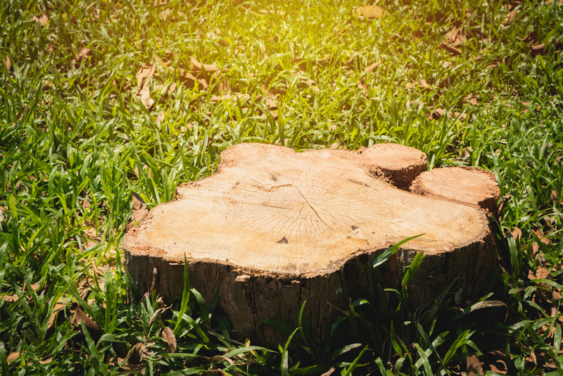 affordable stump grinding service
