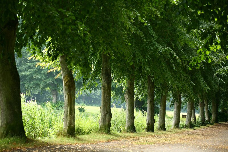 healthy trees after care services